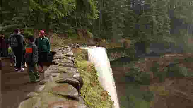 Video Green Friday At Silver Falls State Park