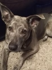 A gray dog named Kalua remains missing after a Salem dog daycare facility was broken into and all of its dogs were released from kennels on Wednesday, March 28, 2018.