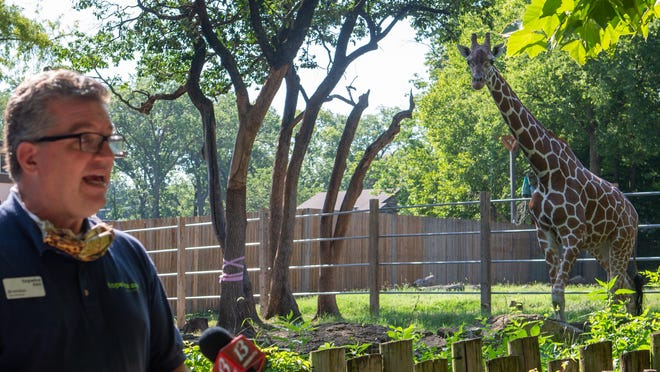A curious giraffe listens in to a news conference Friday morning by Brendan Wiley, director of the Topeka Zoo, as he speaks about the new giraffe exhibit coming soon.
