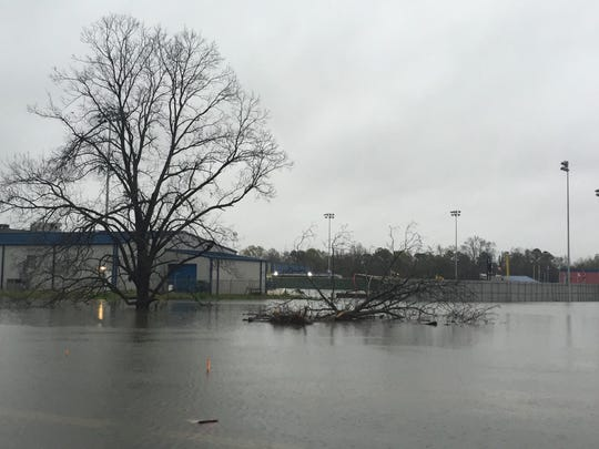 A tree near West Monroe High School's baseball field shows damage from the storms.