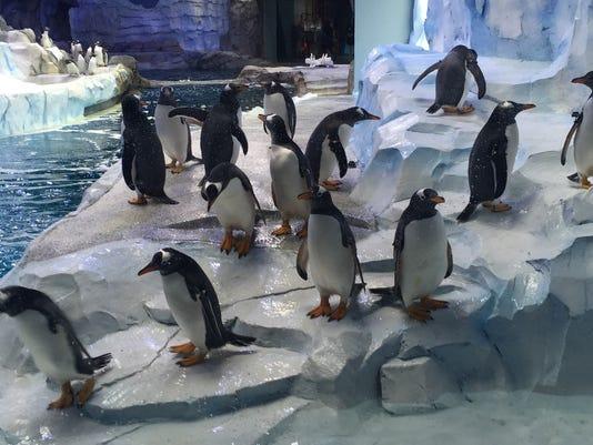 Detroit Zoo penguinarium