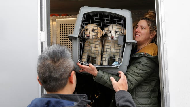 A crate holding two puppies rescued from a South Korean dog meat farm are loaded onto an animal transport vehicle near Kennedy Airport by Animal Haven Director of Operations Mantat Wong, left, and volunteer Nicole Smith Sunday, March 26, 2017, in the Queens borough of New York. The Humane Society International is responsible for saving 46 dogs that would otherwise have been slaughtered. Humane Society officials said the dogs that arrived in New York late Saturday night had awaited death in dirty, dark cages, and were fed barely enough to survive at a farm in Goyang, South Korea.