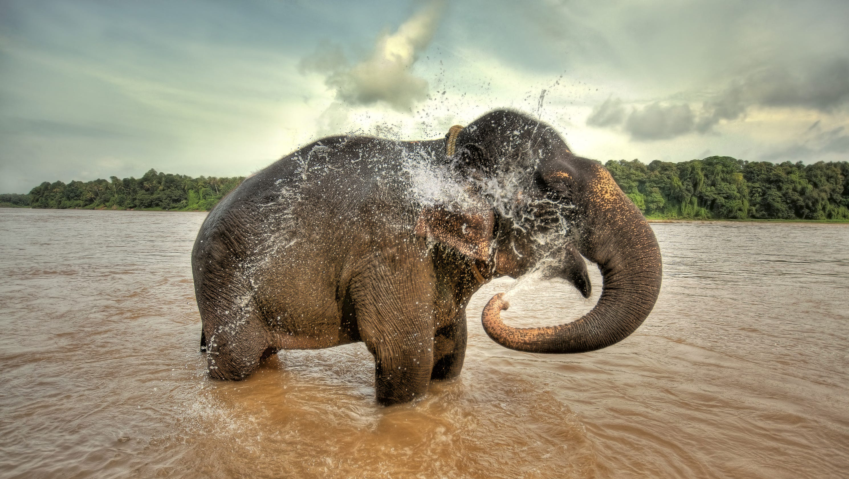 6th mass extinction? Jarring stats on wildlife today