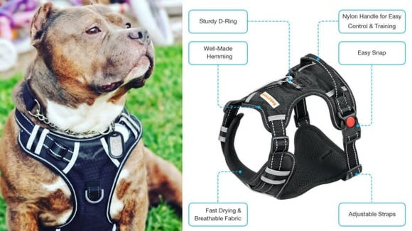 This best-selling no-pull harness is ideal for energetic dogs.