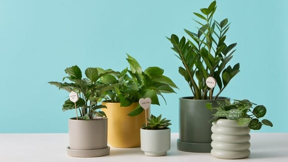 Best unique gifts 2019: The Sill live plant