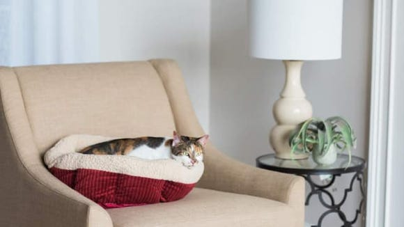 Aspen Pet Self Warming Bed