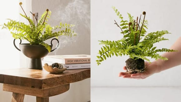 Nope, you're not imagining it. The soil on this artificial plant from Urban Outfitters is fake too.