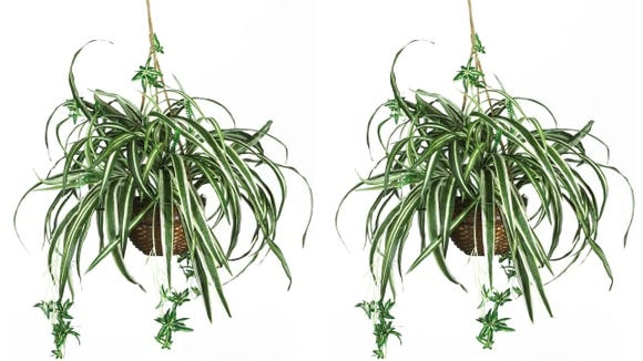Looking for budget-friendly artificial plants? Bed Bath & Beyond is the way to go.