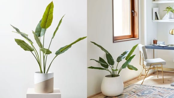 Go green with these realistic-looking artificial plants from West Elm.