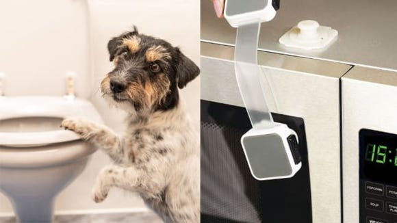 Dog playing near toilet and multi-use latches