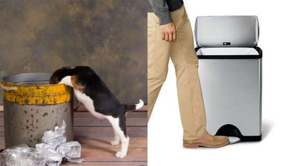 Dog in trash and simplehuman trash can with lid
