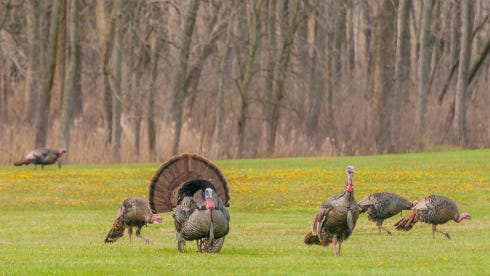 The Wisconsin DNR is looking to lease private land in southeastern Wisconsin to give turkey hunters more room to roam this spring.