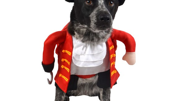 A pirate dog costume from Target.