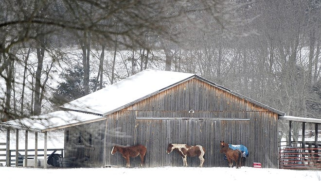 Horses take shelter next to a barn off Clovercroft Road in Williamson County after a snow fall on Thursday March 5, 2015.