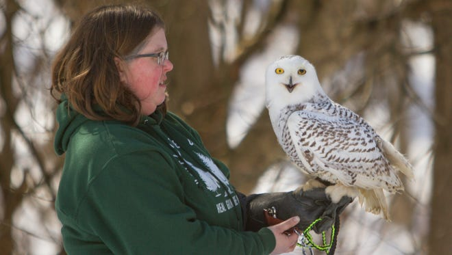A young owl thought to be male is trained by Stephanie Bussema Friday, March 16, 2018 at the Howell Conference and Nature Center, having been brought to the center with an eye injury. The owl, blind in one eye, cannot be rehabiliot