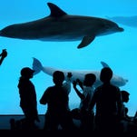 Texas State Aquarium awarded Best Nonprofit Business of the Year