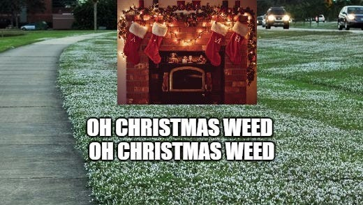 """The Florida """"snow"""" is out in full force right now, which is another way of saying it's time to bust out the weed whacker."""