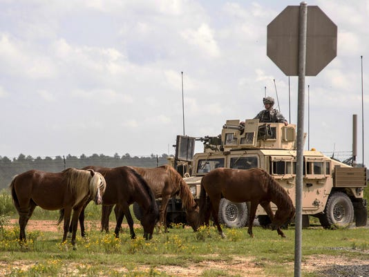 Army Feral Horses