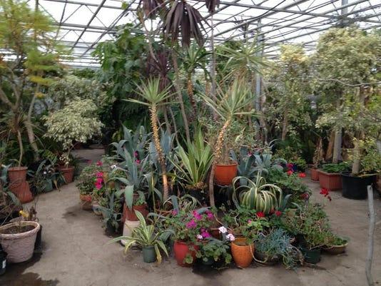 Newbridge Enrich Winter Greenhouse February 2015 Photo 5.jpg