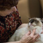 Kitties compete for best-in-show at annual feline showcase