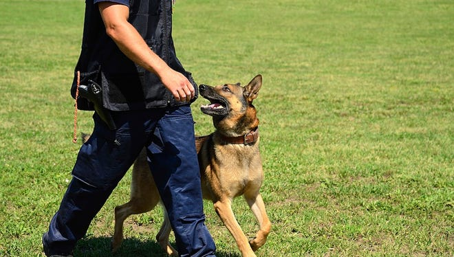 Mount Laurel Police are considering adding K-9s to their ranks.