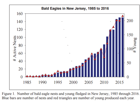 This chart from the state Division of Fish and Wildlife shows the growth of New Jersey's bald eagle population.