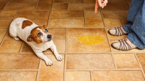Dog urine.