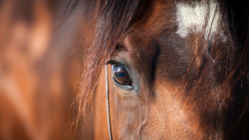 A Gloucester County horse was euthanized after contracting West Nile Virus.