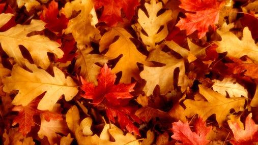 Sturgeon Bay fall leaf collection will run through mid-November.