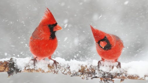 Animals, birds and all other wild critters survive by adapting to the cold and snow.