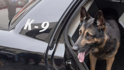 A K-9 is shown in a patrol car. A local animal hospital is collecting care packages for K-9 troops overseas.