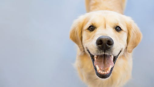 Collier County Domestic Animal Services will offer free microchipping for the first 200 pets current on county licenses/vaccinations on Wednesday and Thursday.