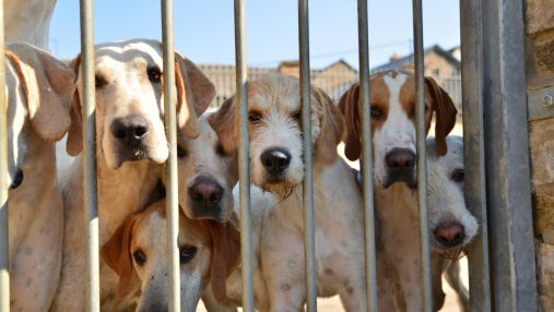 Dogs in a kennel
