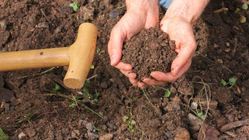 A healthy garden soil is the foundation for successful gardening, and a simple soil test can reveal the existing nutrient levels in the soil and help in strategizing your efforts to improve the soil condition.