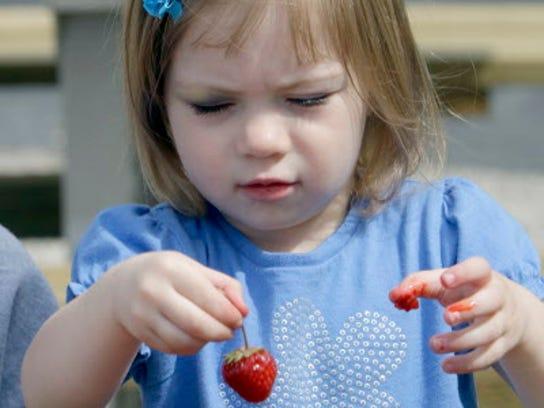 People can pick their own strawberries at Basse's Taste