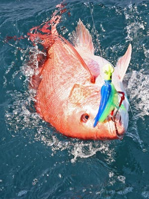 A red snapper hooked on a jig is reeled in.
