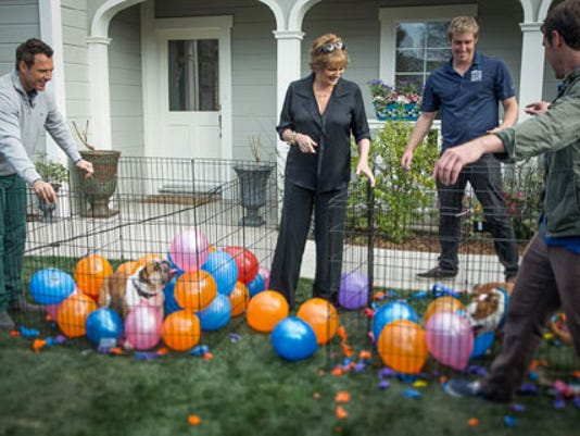 'Home & Family' hosts Mark Steines and Cristina Ferrare are pictured with dogs Rose and Sully, who are popping balloons.<br />(Photo copyright 2013 Crown Media United States, LLC/Alexx Henry Studios)
