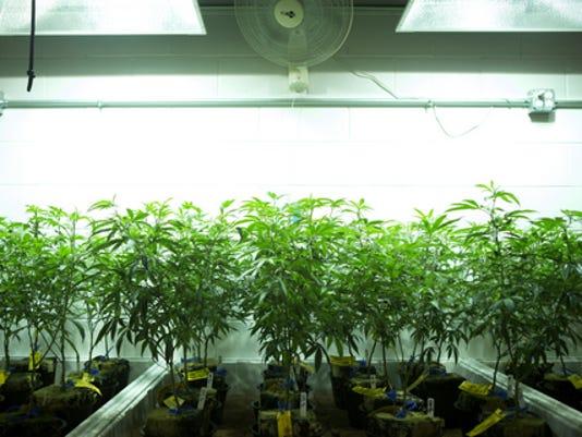 MarijuanaNews.JPG