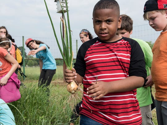 In this Wednesday, April 26, 2017 photo, Tyler ISD TARGET Academy student John Jernigan learns to harvest onions during a field trip to Camp Tyler Outdoor School to learn about farming in Tyler, Texas.