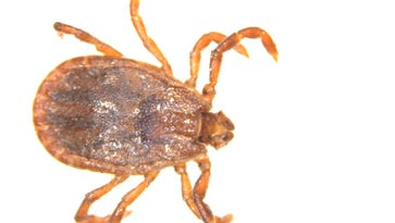 How to avoid ticks and Lyme disease