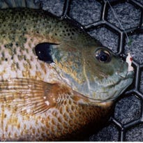 Engberg: Cool tactics for hot weather panfish