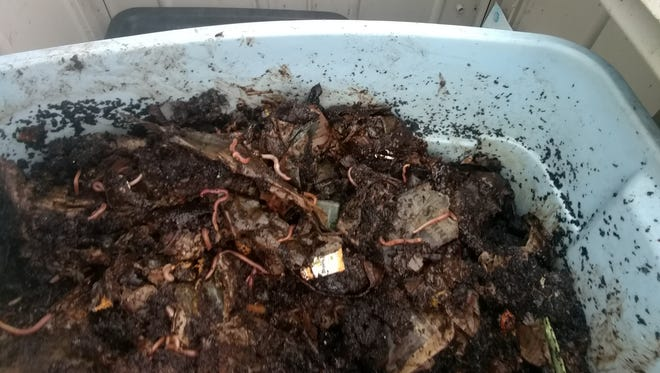This worm box has been used at the Ventura County Government Center's compost demonstration site to illustrate the benefits of vermicomposting.