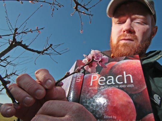 Jeff Hopkins, Musser Fruit Research Farm in Clemson, matches a bloom to photos in a book about peaches, in the fields of the research farm last March.