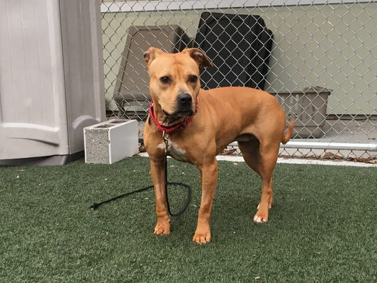A dog named Franny recently completed the American
