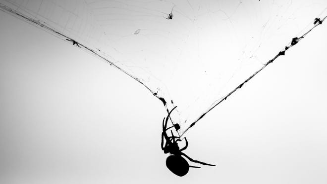 Stock image of  a spider on its web in front of storm clouds.