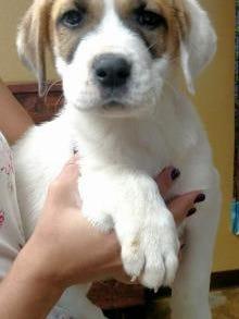 Pet of the Day: Bolivar