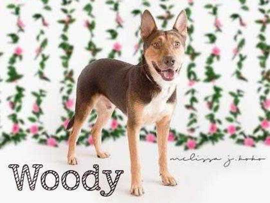 Woody - Male (neutered) shepherd mix, about 5 years