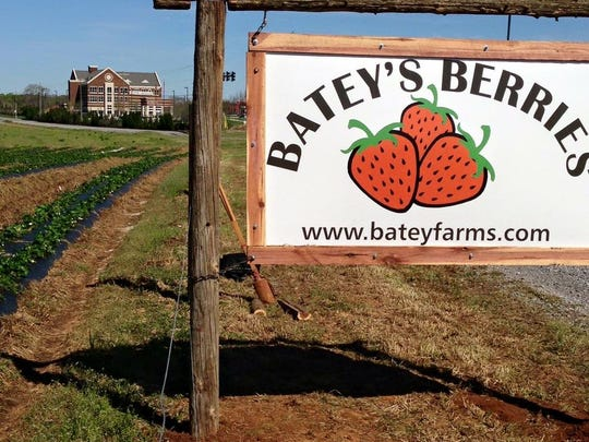 Batey's Berries is located at 3250 Wilkinson Pike in