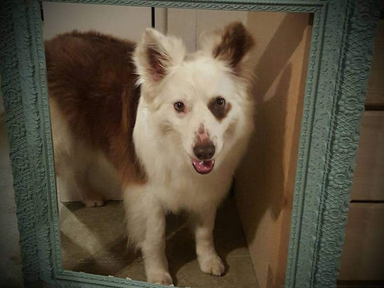 """Pet columnist Katrena Mitchell recently lost her beloved dog, Apache. The friendly and well-trained Apache took to the stage as """"Sandy"""" in a 2015 production of """"Annie"""" at the Wichita Theatre."""