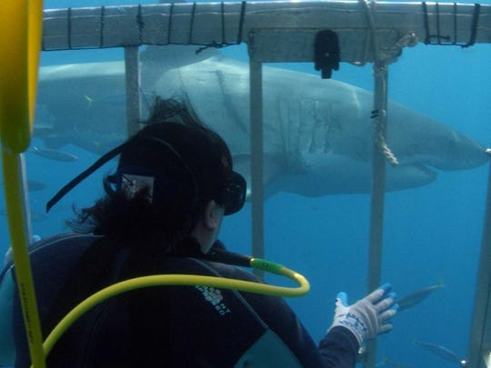 Toby Daly-Engel, a shark researcher and assistant professor of biology at the Florida Institute of Technology, has had many close encounters with sharks in her career.